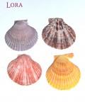 Deniz Ürünleri - 14258